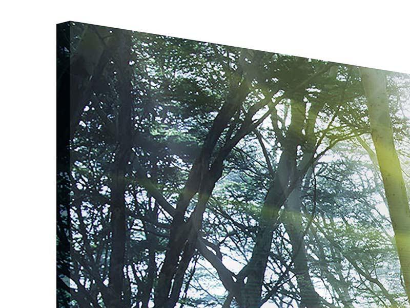 Acrylglasbild 4-teilig modern Sonnenstrahlen im Wald