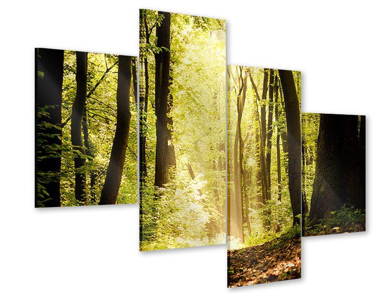 Acrylglasbild 4-teilig modern Sonnenaufgang im Wald