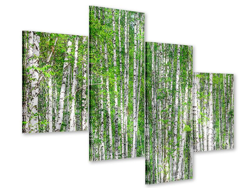 Acrylglasbild 4-teilig modern Der Birkenwald