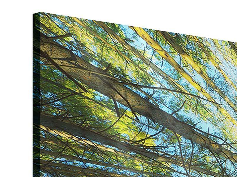 Acrylglasbild 4-teilig modern Kiefernwald