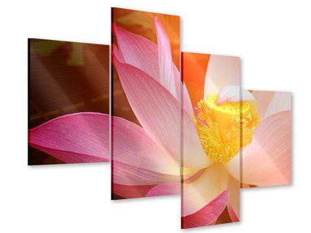 Acrylglasbild 4-teilig modern Close Up Lotus