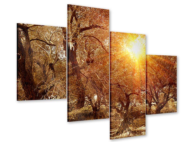 Acrylglasbild 4-teilig modern Olivenbäume im Herbstlicht