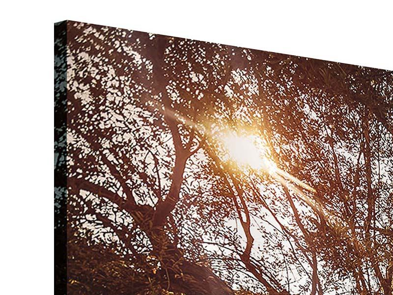 Acrylglasbild 4-teilig modern Olivenhain