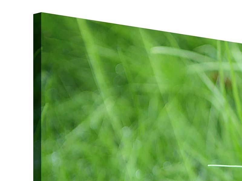 Acrylglasbild 4-teilig modern Grashalme