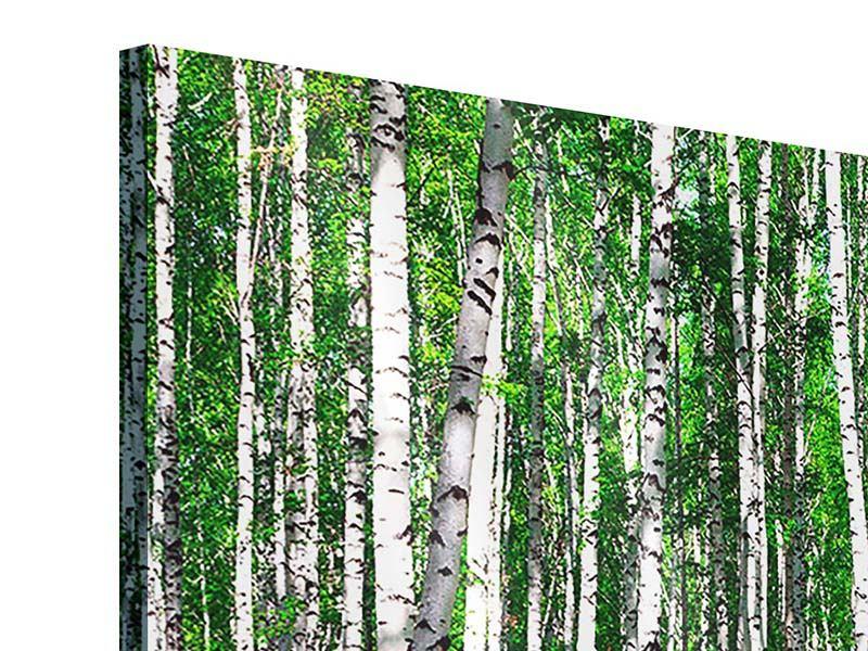 Acrylglasbild 4-teilig modern Sommerlicher Birkenwald