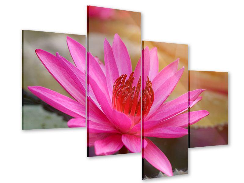 Acrylglasbild 4-teilig modern Sonnige Seerose