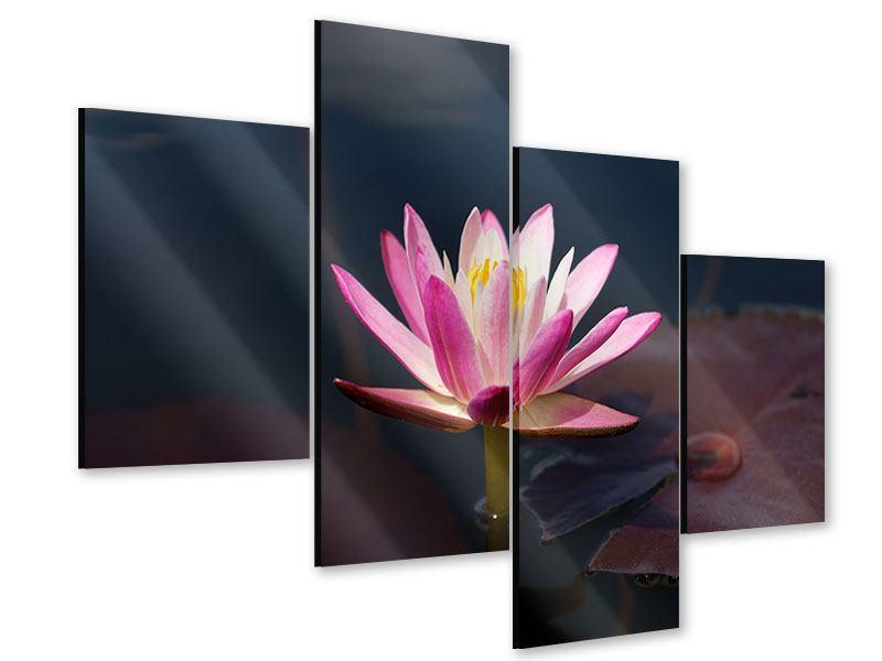 Acrylglasbild 4-teilig modern Seerose in der Abenddämmerung