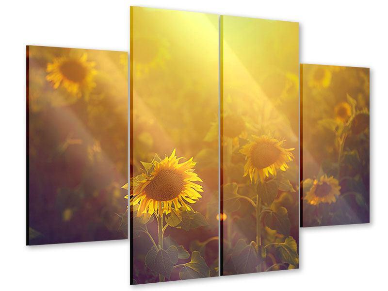 Acrylglasbild 4-teilig Sonnenblumen im goldenen Licht