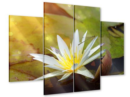 Acrylglasbild 4-teilig Seerose