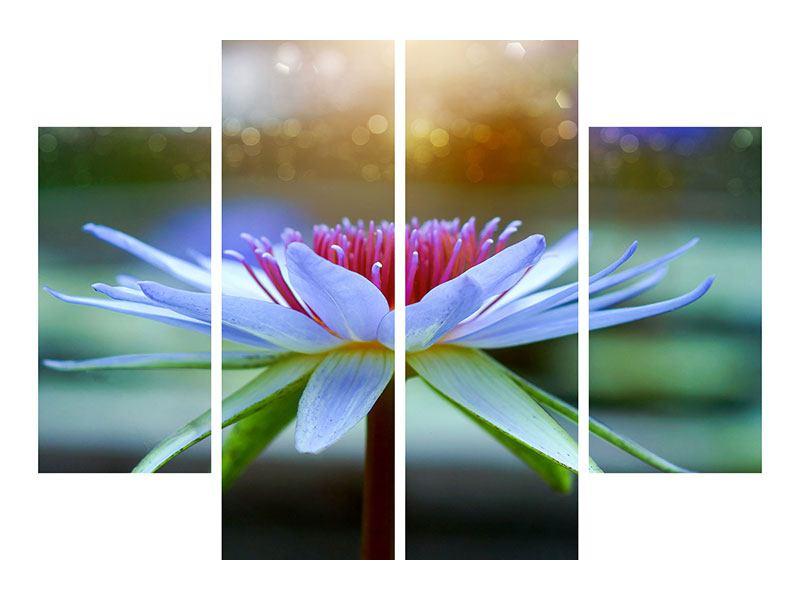 Acrylglasbild 4-teilig Pretty Lotus