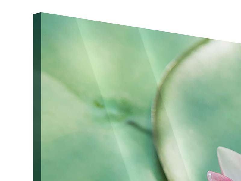 Acrylglasbild 4-teilig Der Frosch und das Lotusblatt