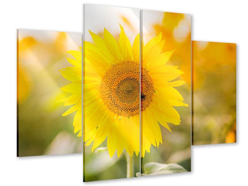 Acrylglasbild 4-teilig Sunflower
