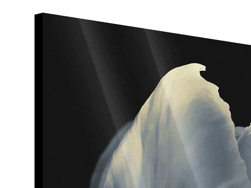 Acrylglasbild 4-teilig Schwarzweissfotografie XXL Tulpe