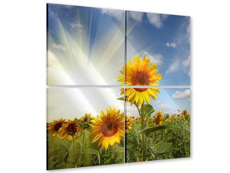 Acrylglasbild 4-teilig Sonnenblumen im Sonnenlicht