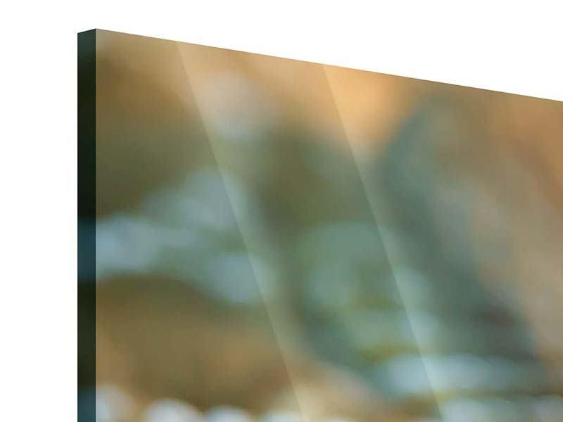 Acrylglasbild 4-teilig Viper
