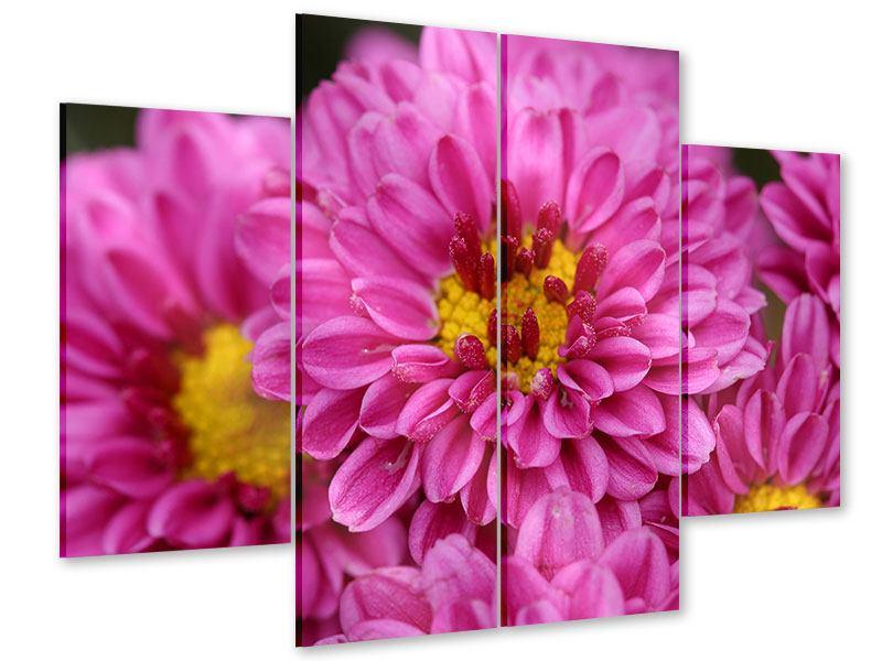 Acrylglasbild 4-teilig Chrysanthemen