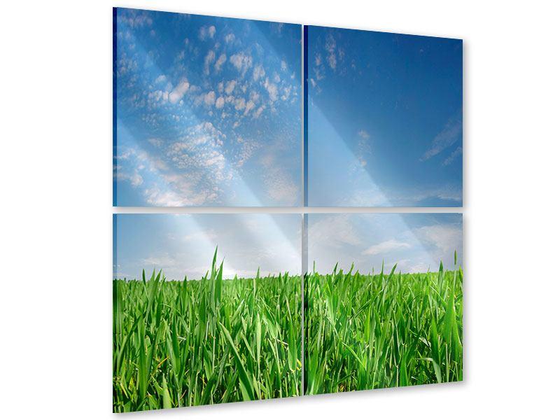 Acrylglasbild 4-teilig Das Gras