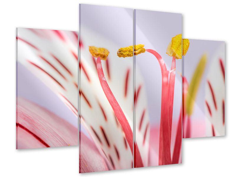 Acrylglasbild 4-teilig Close Up Die exotische Schönheit