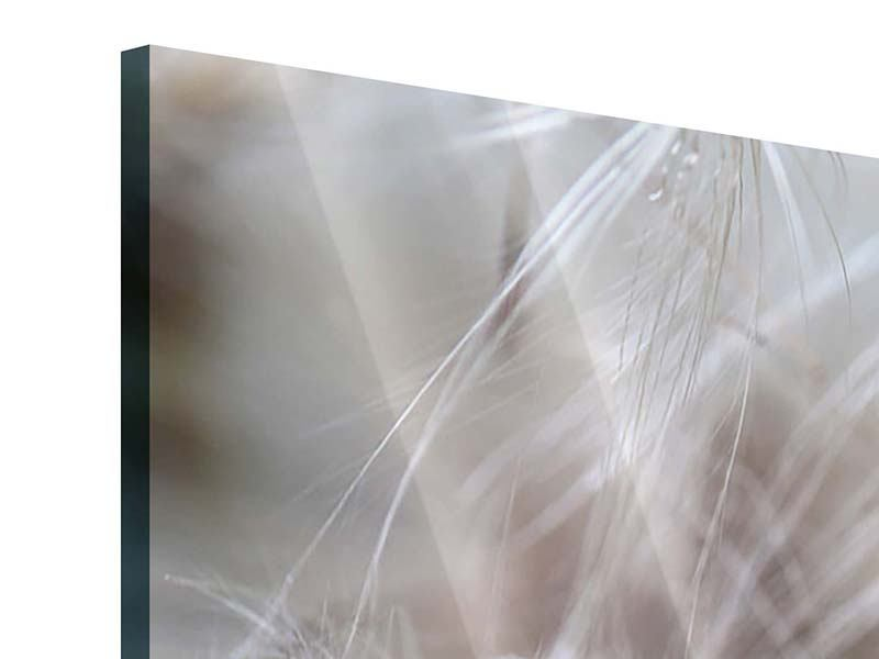 Acrylglasbild 4-teilig Close up Blütenfasern