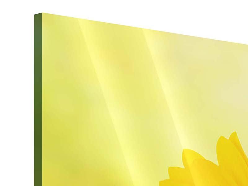 Acrylglasbild 4-teilig Die Sonnenblume