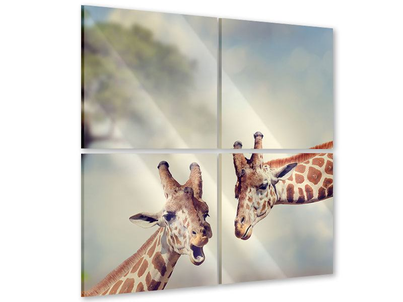 Acrylglasbild 4-teilig Giraffen