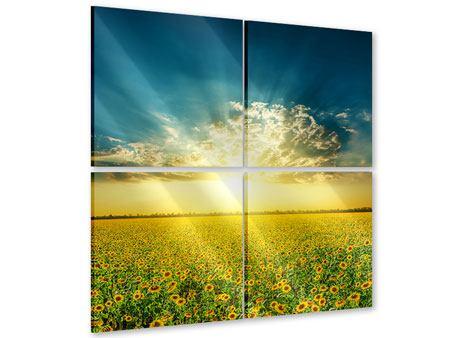 Acrylglasbild 4-teilig Sonnenblumen in der Abendsonne