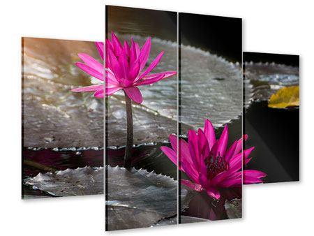 Acrylglasbild 4-teilig Seerosen im Morgentau