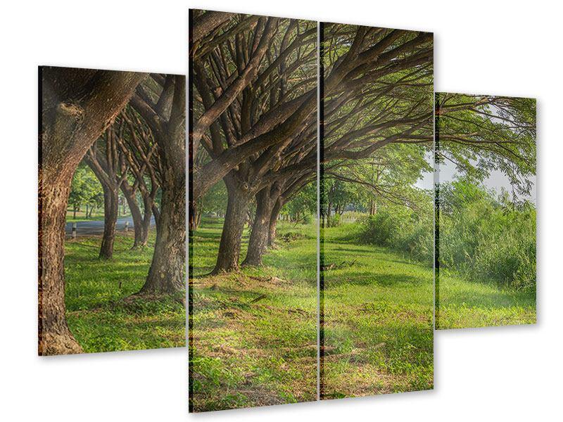 Acrylglasbild 4-teilig Alter Baumbestand