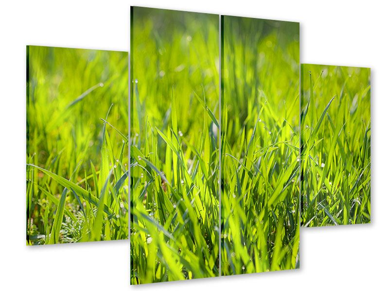 Acrylglasbild 4-teilig Gras im Morgentau