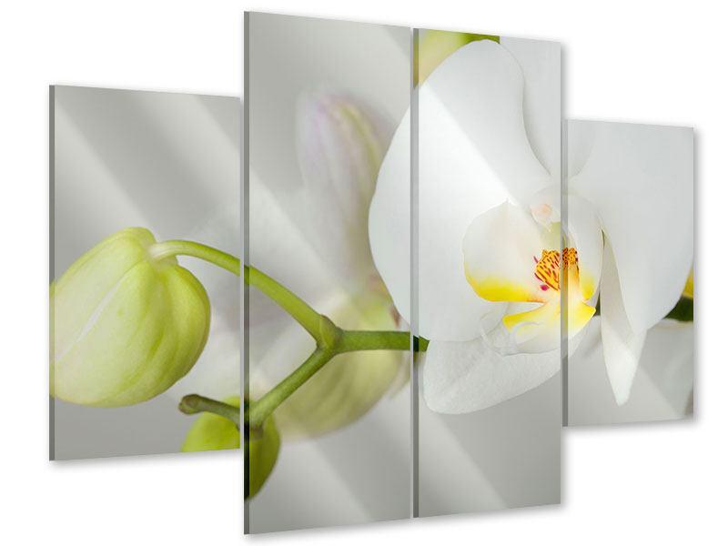 Acrylglasbild 4-teilig Riesenorchidee