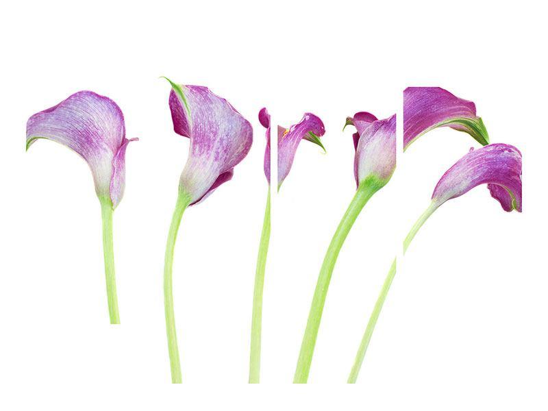 Acrylglasbild 4-teilig Callas in Lila