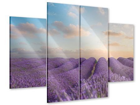 Acrylglasbild 4-teilig Das blühende Lavendelfeld
