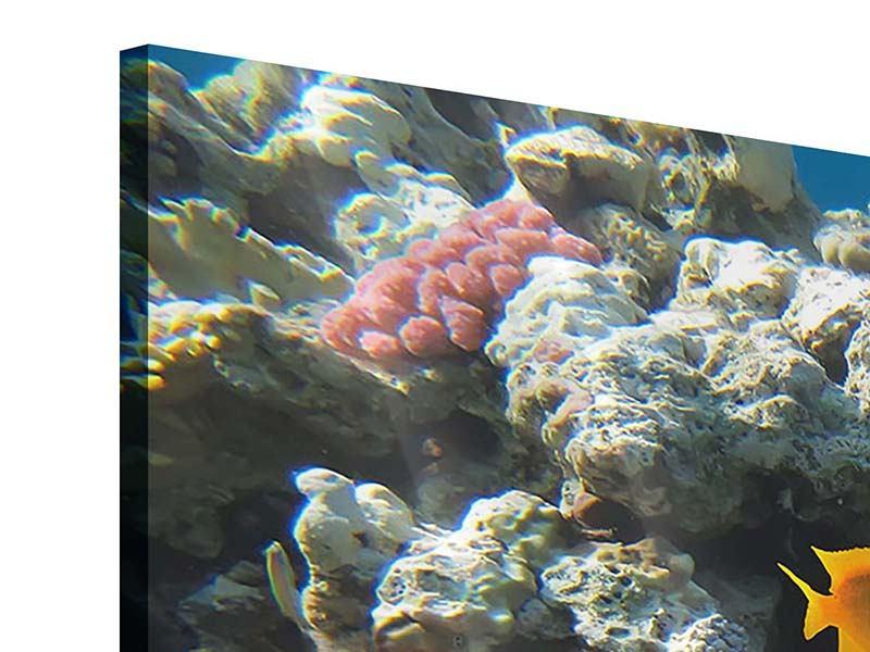 Acrylglasbild 4-teilig Das Aquarium
