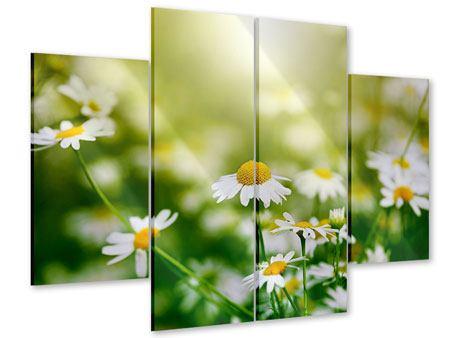 Acrylglasbild 4-teilig Die Gänseblümchen