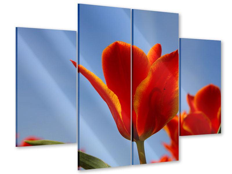 Acrylglasbild 4-teilig Rote Tulpen in XXL