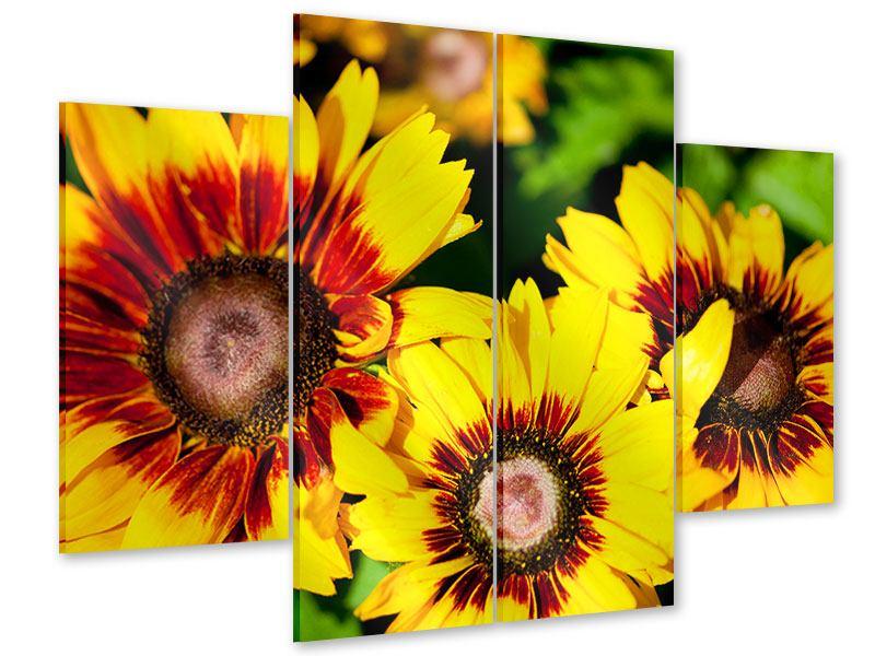 Acrylglasbild 4-teilig Reife Sonnenblumen