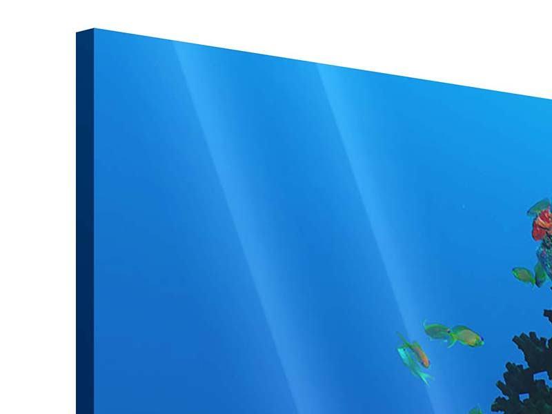 Acrylglasbild 4-teilig Die Welt der Fische