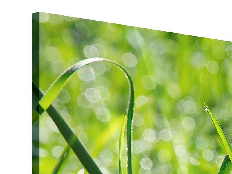 Acrylglasbild 4-teilig Sonniges Gras
