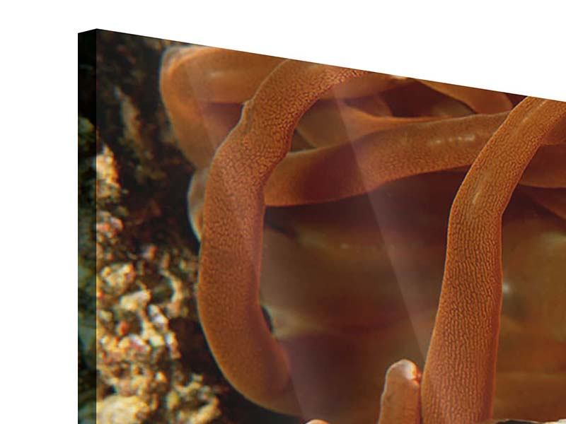 Acrylglasbild 4-teilig Nemo