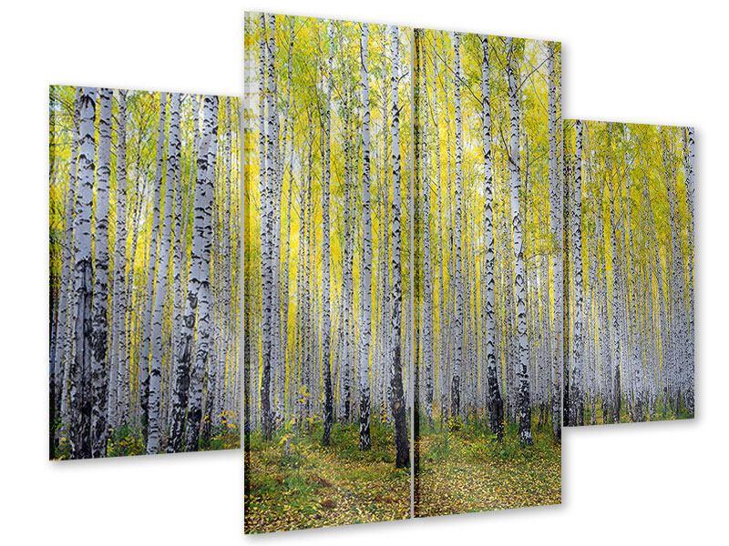 Acrylglasbild 4-teilig Herbstlicher Birkenwald