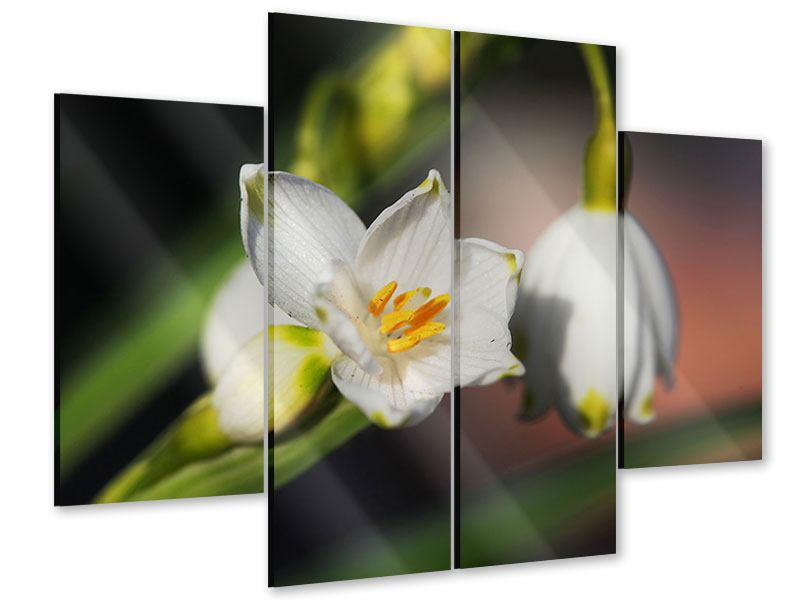 Acrylglasbild 4-teilig Schneeglöckchen XXL