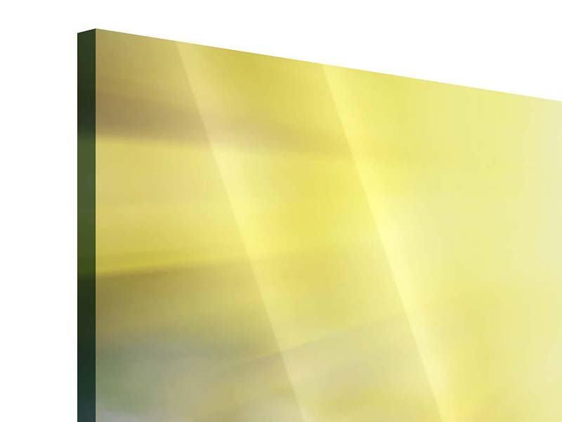 Acrylglasbild 4-teilig Blumige Wiese