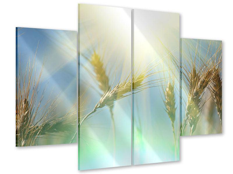 Acrylglasbild 4-teilig König des Getreides