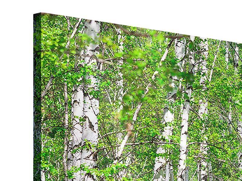 Acrylglasbild 4-teilig Der Birkenwald