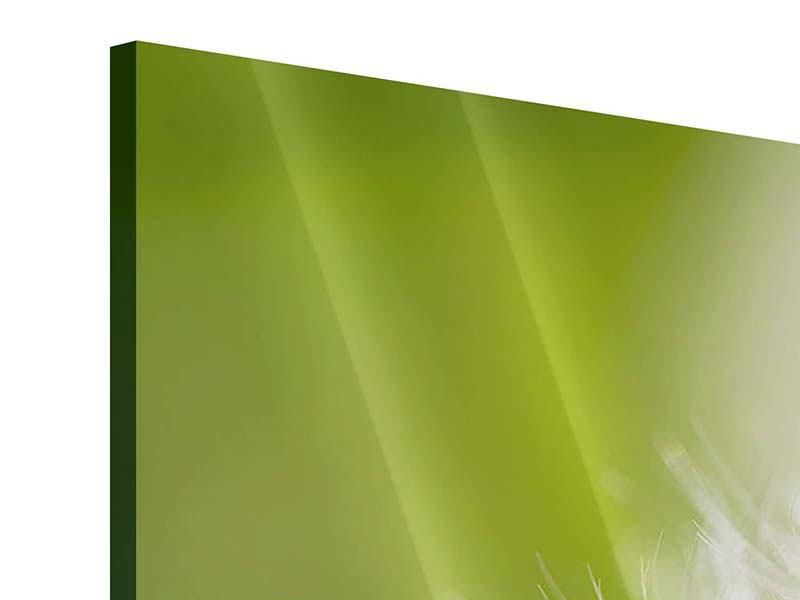 Acrylglasbild 4-teilig Pusteblume Löwenzahn