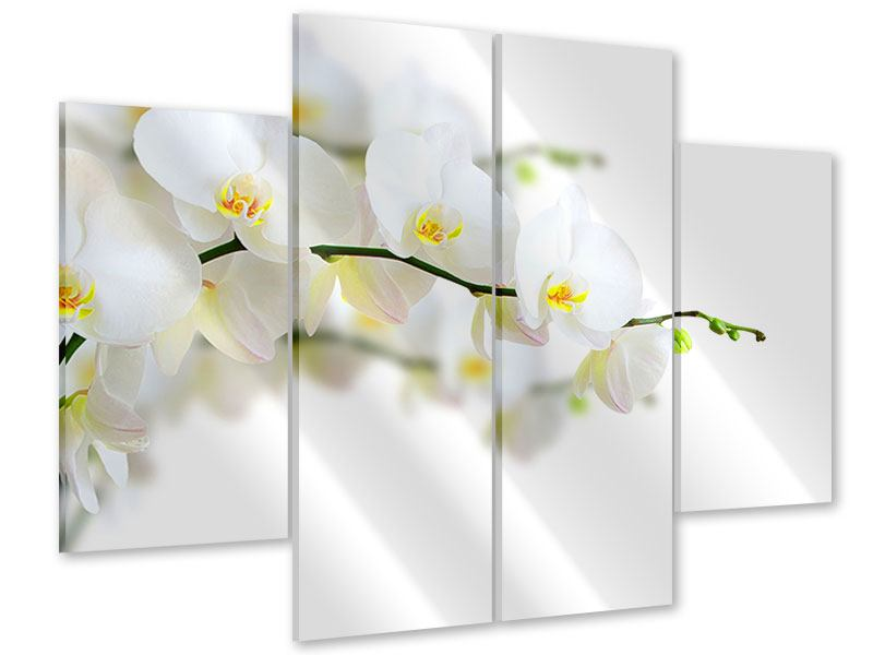 Acrylglasbild 4-teilig Weisse Orchideen