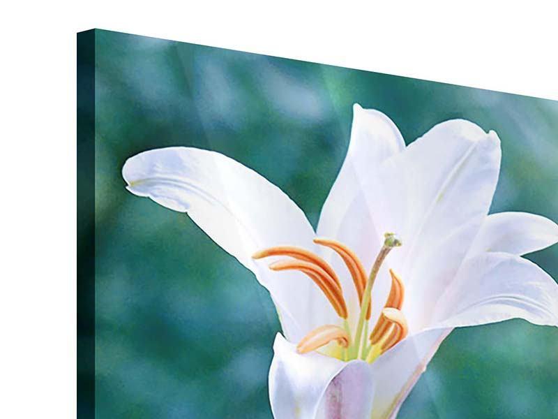 Acrylglasbild 4-teilig Weisses Lilienduo