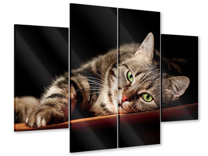 Acrylglasbild 4-teilig Entspannte Katze