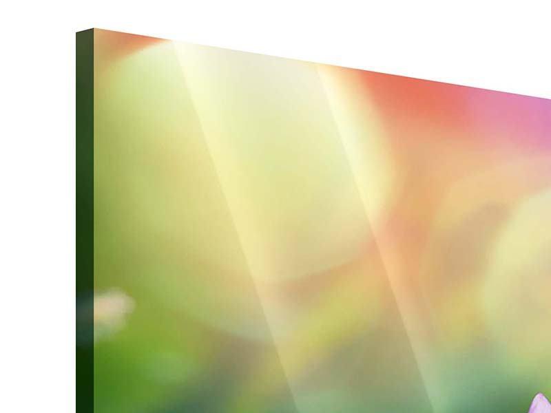 Acrylglasbild 4-teilig Colored Lotus