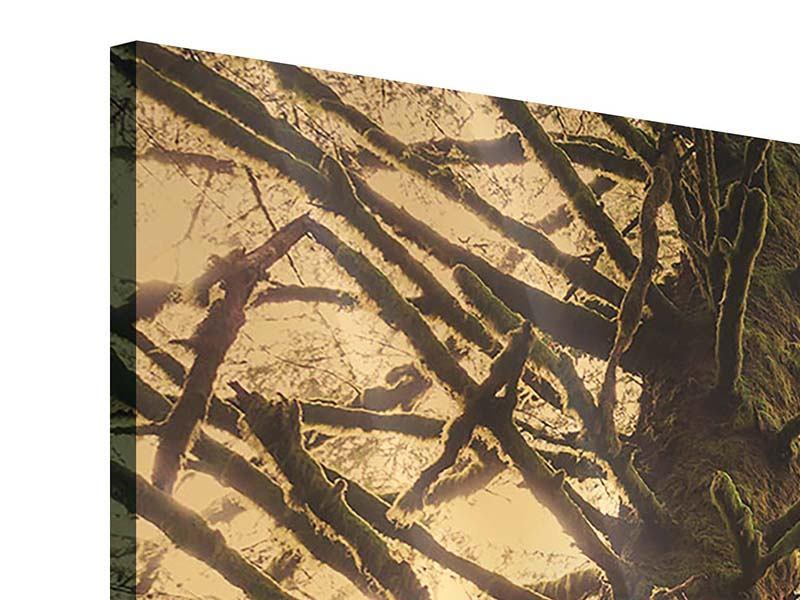 Acrylglasbild 4-teilig Sonnenuntergang im Dschungel